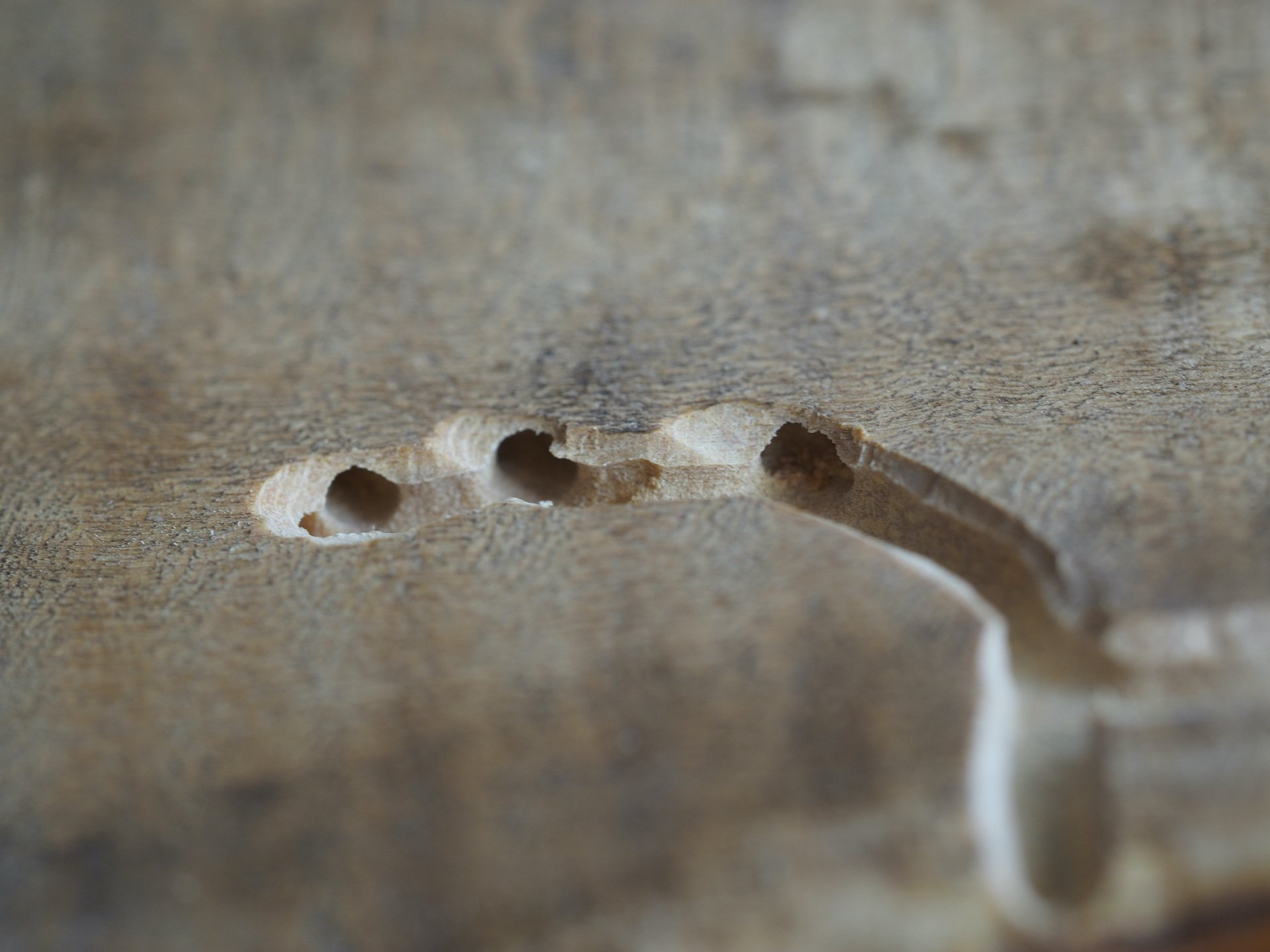 Die Wurmgänge bilden ein richtiges Labyrinth